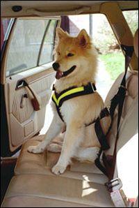 Bilbälte hund biltema