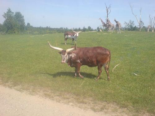 zoo billund escort odense