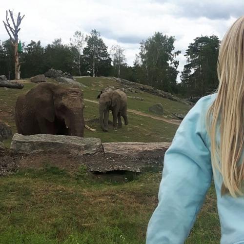 borås djurpark pris