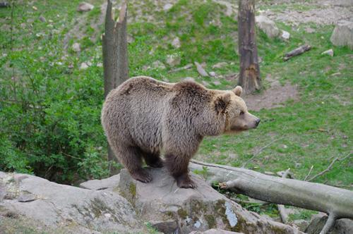rabatt borås djurpark 2019