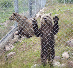 """<span class=""""highlight"""">Orsa</span> djurpark- underbart för björnälskare&#160;..."""