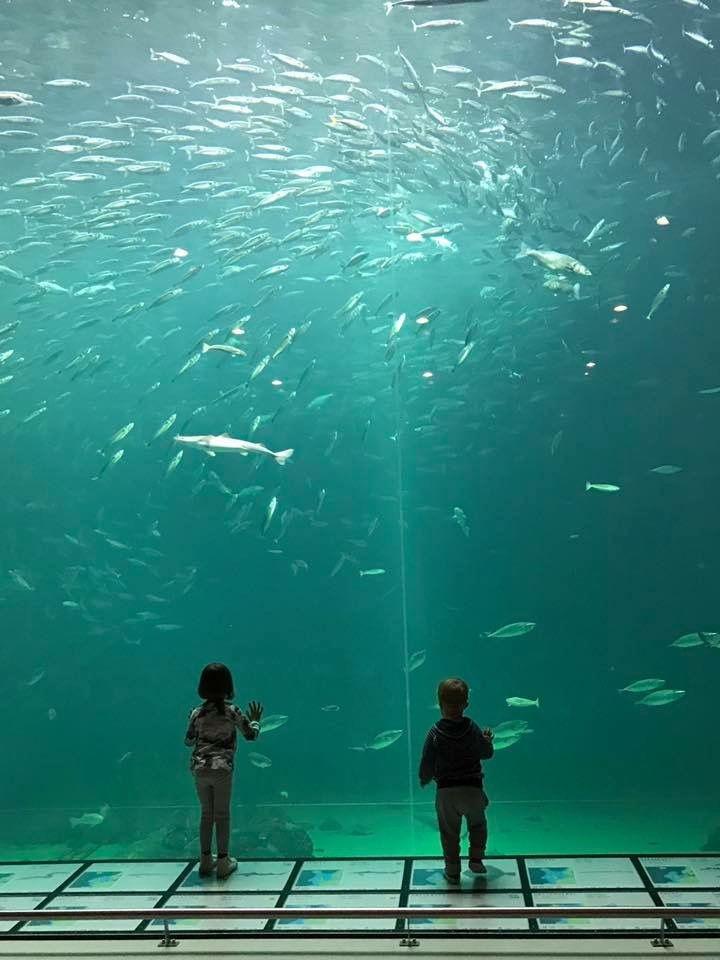 Den undre havsvärlden